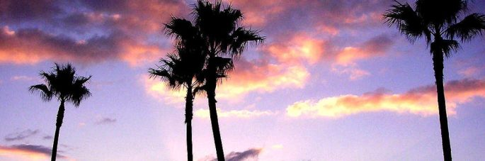 cropped-palm_trees_at_sunset.jpg